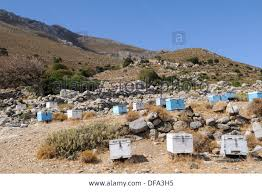 bee boxes on the Greek hillside