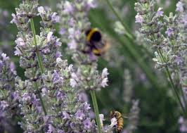 Wild thyme honey only grows in Greece and constitutes only 10% of the country's honey production.