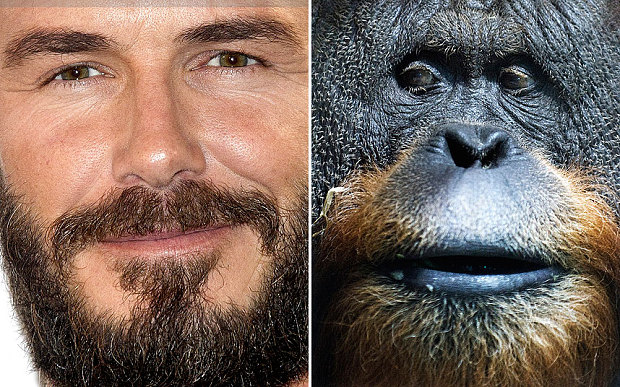 beards in evolution